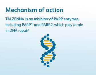 Mechanism of action. TALZENNA (talazoparib) is an inhibitor of PARP enzymes, including PARP1 and PARP2, which play a role in DNA repair. Click to learn more.
