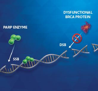 Cancer cells image 1