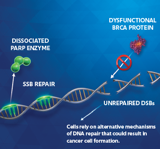 Cancer cells image 2