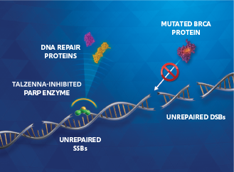 PARP enzyme inhibition image