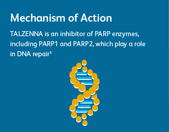 Mechanism of Action TALZENNA is an inhibitor of PARP enzymes, including PARP1 and PARP2, which play a role in DNA repair1