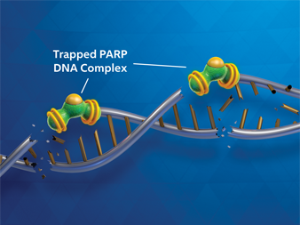 Trapped PARP DNA complex diagram