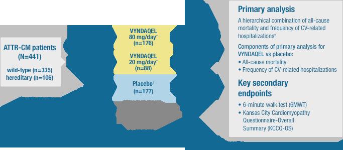 Study Design Vyndamax Tafamidis Hcp Safety Info